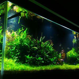 Mi acuario plantado