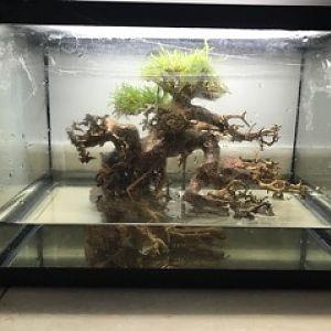 proyecto bonsai