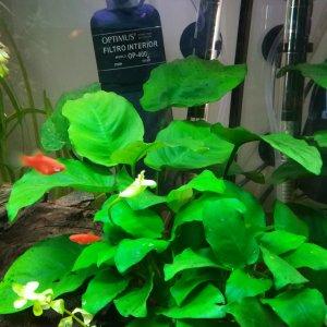 Flor en mi acuario