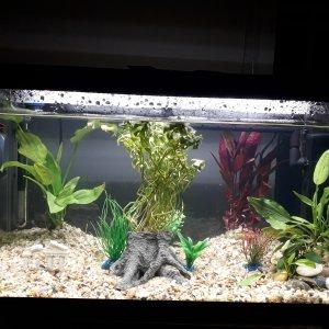 Mi nuevo acuario