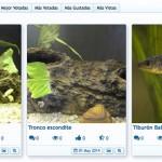 Galería de fotos de Acuarios y Peces