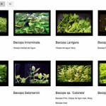 Letras B y C para el Atlas de Plantas de Acuarios de Agua Dulce