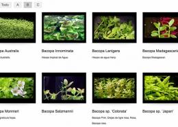 Letras B y C para el Atlas de Plantas